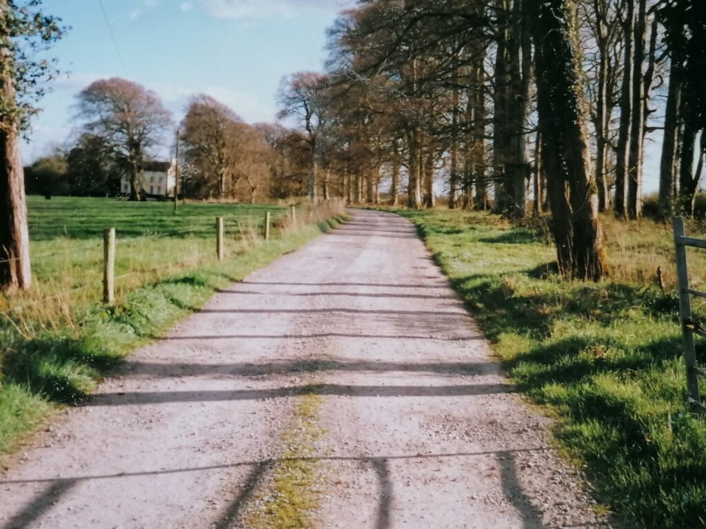 The avenue leading to Bushy Park House - picture courtesy of Helga Mullins.
